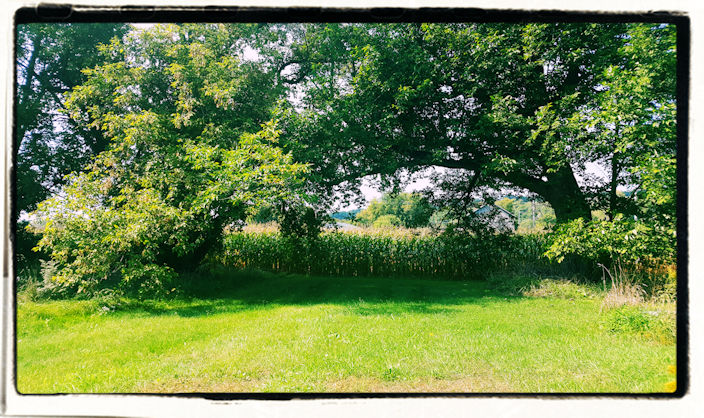 uLog #43 – My Office Is Under A Tree Today And I Can't Do A Thing With It.